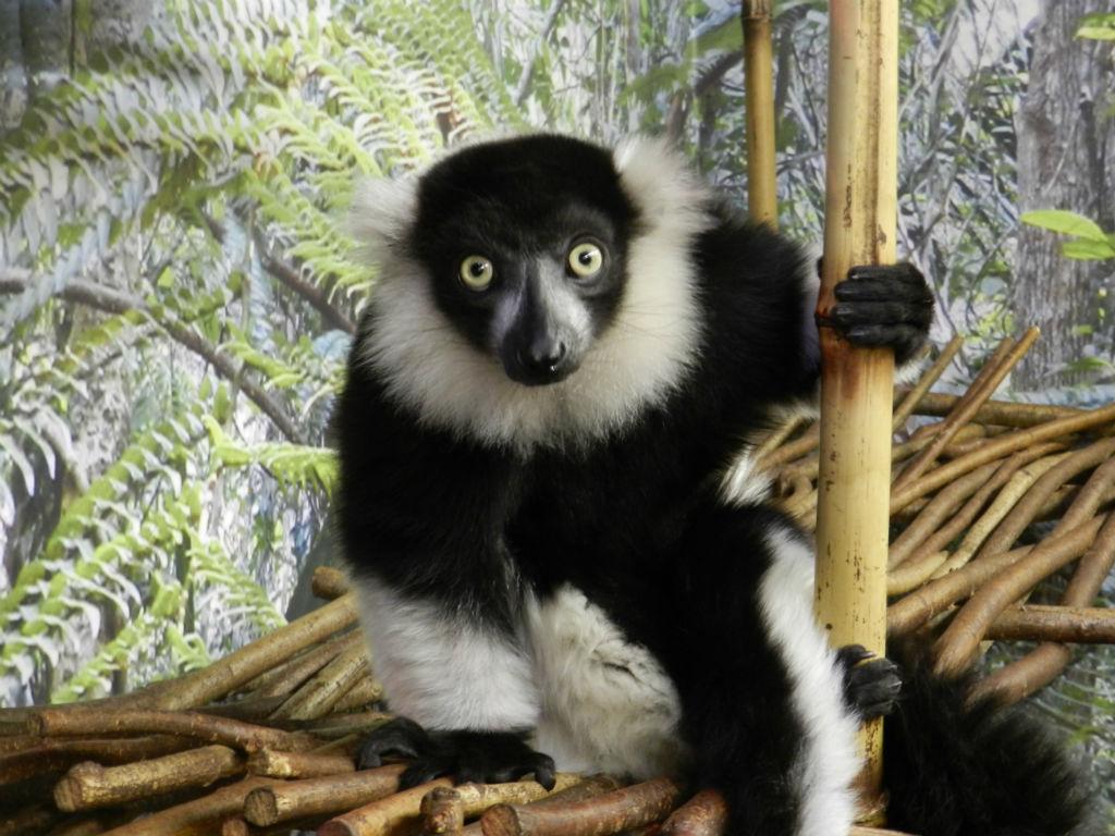 EKZOland - зоопарк нового поколения