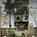 Музей «Анатомии животных»